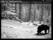 Banff a wild year