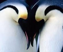 penguin avicii
