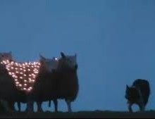 led sheep Samsung sheep