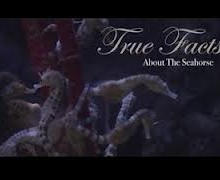 True Facts about the Sea Horse