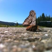 Base Moth